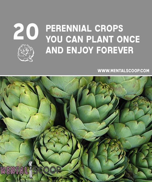 The Everlasting Garden: 20 Perennial Crops You Can Plant Once and Enjoy Forever