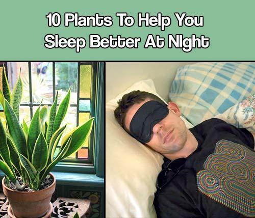 10 plants to help you sleep mental scoop. Black Bedroom Furniture Sets. Home Design Ideas