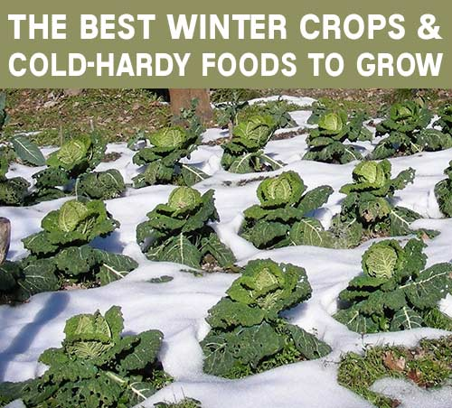 Flowers Grown In Winter: The Best Winter Crops And Cold-Hardy Foods To Grow