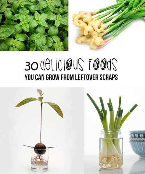 Fruits Veggies You Can Regrow From Scraps: 30 Delicious Foods You Can Grow From Leftover Scraps