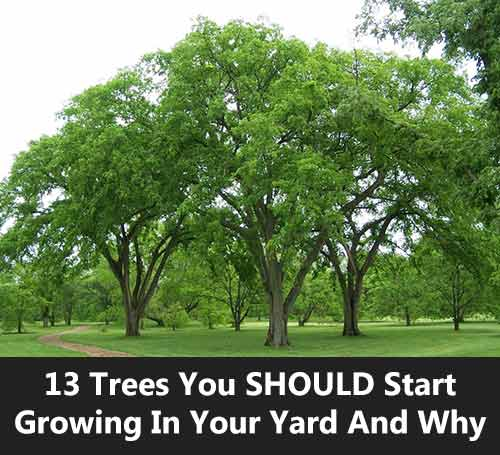 Trees For Small Backyard: 13 Trees You SHOULD Start Growing In Your Yard And Why