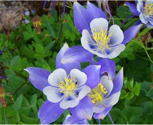 7 Perennials That Will Bloom Multiple Times This Summer