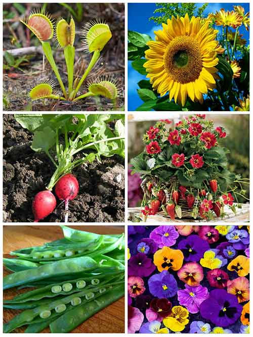 12 easy and fun plants for kids to grow mental scoop for Small easy to grow plants