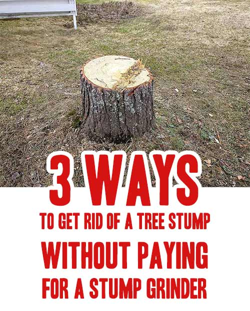 3 Ways To Get Rid Of A Tree Stump Without Paying For A Stump Grinder Mental Scoop